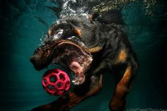 Awesome underwater photography~