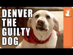 Denver the Guilty Dog - Memed