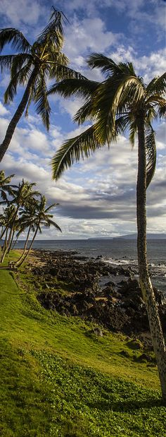 Tropical Days in Maui.  Right on the south side of Kihei these beautiful palms hang over the rocky shoreline.  by Brad Scott