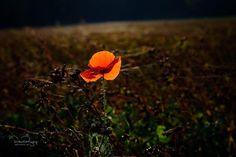 #naturephotography #naturelovers #flower #flowers #flowerphotography #flower #fuji #fujifeed #nature_perfection #artystycznapodroz