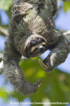 Stay a night at the Sloth Sanctuary in Costa Rica