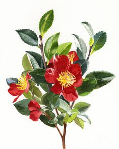 Red Christmas Camellias Painting by Sharon Freeman