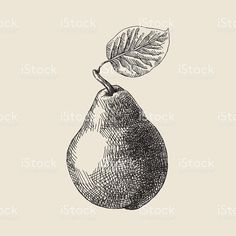 Drawing Hair Techniques Pear Drawing royalty-free stock vector art - Vector illustration of pear. Pear Drawing, Hatch Drawing, Pencil Art Drawings, Art Drawings Sketches, Art Tutorials, Drawing Tutorials, Pencil Shading, Black And White Drawing, Art Graphique