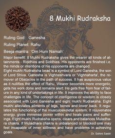 8 Mukhi Rudraksha..