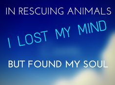 """""""In rescuing animals I lost my mind, but found my soul.""""  Click on the image for more inspirational rescue dog quotes. #quotes #rescuedogs"""