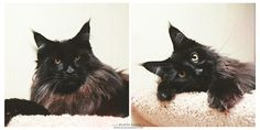 Between these two photos it took two seconds My cat Sicko