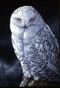 Snowy Owl - Painting Art by Jeremy Paul - Nature Art & Wildlife Art - Wildlife in its environment - Paul Art Owl Bird, Bird Art, Pet Birds, Owl Photos, Owl Pictures, Beautiful Owl, Animals Beautiful, Owl Quilts, Felt Owls