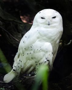 Hedwig is not amused.