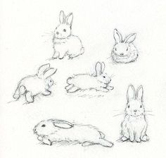 how to draw rabbits realistic - Recherche Google
