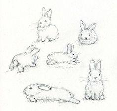 how to draw rabbits realistic - Recherche Google