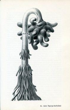 Leo Lionni - Parallel Botany, 1977.