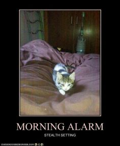 I've been awoken many mornings by this alarm! I miss my stealth alarm clocks.