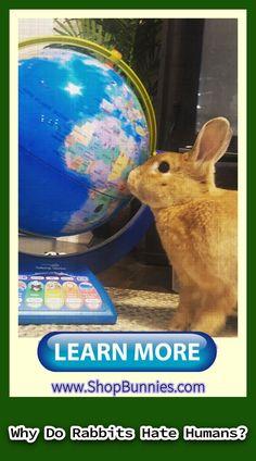 rabbit care website    rabbit care animals    rabbit care pictures    rabbit care sweets    rabbit care articles    rabbit care life Rabbit Treats, Rabbit Toys, Pet Rabbit, Rabbit Facts, Cosy Bed, Rabbit Eating, Bunny Care, House Rabbit, How To Train Your