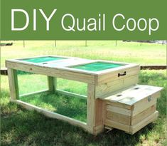 DIY Quail Coop - simple way to get started raising quail on your homestead... #diy #quail #homestead #homesteading
