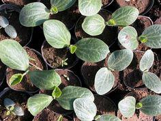 Cómo hacer el mejor semillero para nuestras plantas paso a paso