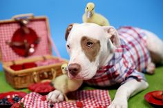 Like go on picnics… | This Rescue Dog Adopted These Abandoned Ducklings And It's Adorable
