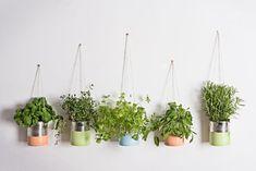 DIY - Un jardin aromatique suspendu - Avec ce DIY simple et rapide, voici un moyen astucieux et élégant de disposer vos plantes aromatiques dans la cuisine.