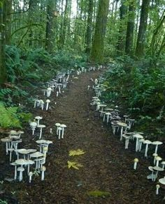 A fungi path located at the Cloud Mountain Retreat in Washington. I've never seen fungi used in the landscape like this - amazing! All Nature, Science And Nature, Amazing Nature, Wild Mushrooms, Stuffed Mushrooms, Garden News, Mushroom Fungi, Mushroom Seeds, Pathways