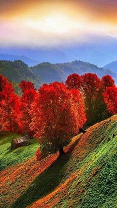 The post Incredible! autumn scenery appeared first on Trendy. Fall Pictures, Nature Pictures, Beautiful Pictures, Landscape Photography, Nature Photography, Autumn Scenes, Nature Wallpaper, Amazing Nature, Beautiful World