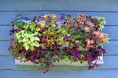 Let's Get Vertical: Craft a Felt Wall Planter — Old School
