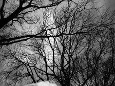 The trees (3/3) Olympus XA2  bleached #Lomography Earl Grey BW 100 #filmphotography #lomographyfilm #bleach #bleached #trees #triptych #BW #naked  Please visit http://bit.ly/adg_lomo for more analog love  #resourcemag #filmphotographic #heyfsc #thefilmcommunity #BelieveInFilm #IShootFilm #TodaviaDisparoEnAnalogico #helloCFPG  @lomography @lomographicsociety @filmshooterscollective @art.film @whattaroll @analoguevibes @hylasmagazine @flakphoto