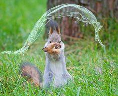 Esquilo Dobrador de Água ❤