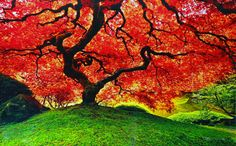 Peter Lik fuji cibachrome prints have been our #1 seller during 2010-14. Description from artbrokerage.com. I searched for this on bing.com/images
