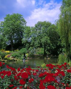 Queen Mary's Rose Gardens, Regents Park, London