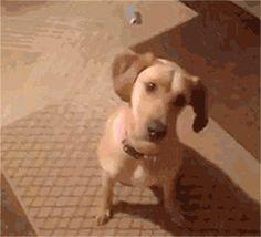;y=ー( ゚д゚)・∵. ターン 圧倒的な演技力で「理不尽な悲劇」を表現する犬