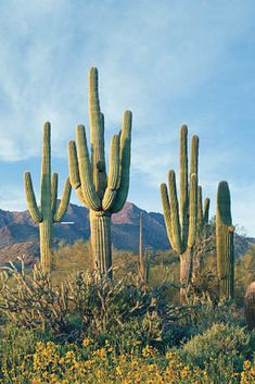 Looking to move to Scottsdale, AZ? Here's 8 reasons why you should.