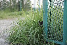 Gatos escondidos [Aver si los ves]