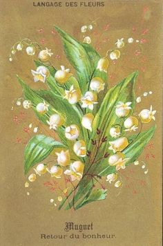 Flower drawing - Lily of the Valley