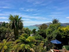 A vet, teaching in tertiary education, living in Christchurch, New Zealand, post earthquake Tertiary Education, Canterbury, New Zealand, Beautiful Places, City, Plants, Pictures, Photos, Photo Illustration