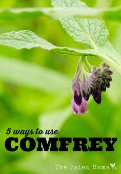 5 Ways to Use Comfrey | The Paleo Mama