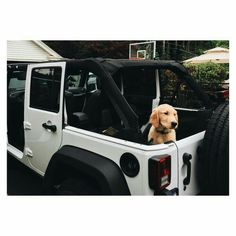 Jeep and Doggy