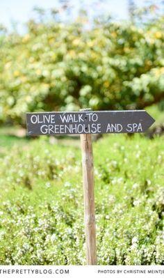 Put Babylonstoren On Your Must-Visit List Lush Garden, Home And Garden, South African Weddings, Farm Shop, Afrikaans, Luxury Hotels, Glass House, Shop Ideas, You Must