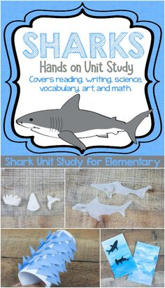 Handson Shark STEAM Unit Study for Fun Shark Learning is part of Science Education Unit Studies - Ready to learn about sharks using hands on and memorable activities Look no further, it's all planned out for you here in this engaged shark unit study! Summer School Activities, Shark Activities, Science Activities For Kids, Preschool Science, Science Education, Preschool Activities, Summer School Themes, History Education, Science Fun
