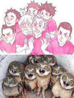 #hq #fukuridani #owls