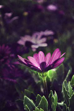 Firefly | Flickr - Photo Sharing!