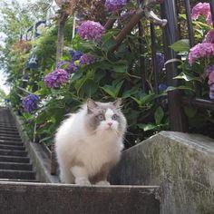 Wata-ame #neko #cat (via wataamedetyuyo