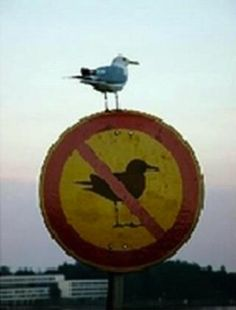 funny bird sign