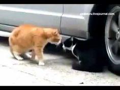 как общаются коты!!!! прикол