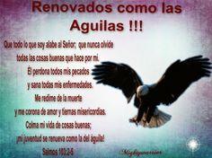 """JESUS PODEROSO GUERRERO: Salmos 103:2-5 ~~~ """" Renovados como las Aguilas """""""