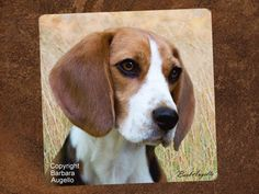 Beagle Tile Coasters by Barbara Augello for Dogimage