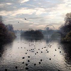 A fine, foggy walk through St.James's Park this morning.... I wish!