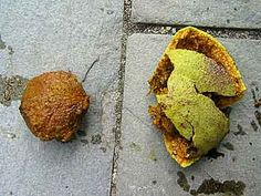 Black Walnuts - how to dry and get at nut.
