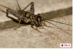 Best Of Getting Rid Of Crickets In Basement