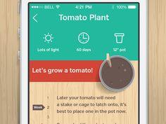 My Garden - Tomato Plant by Greg Beldam (Ottawa, ON)