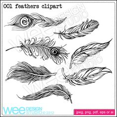 3rd one down on the right starting with the peacock feather at the very top