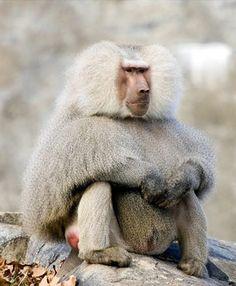 monkey.jpg (320×389)